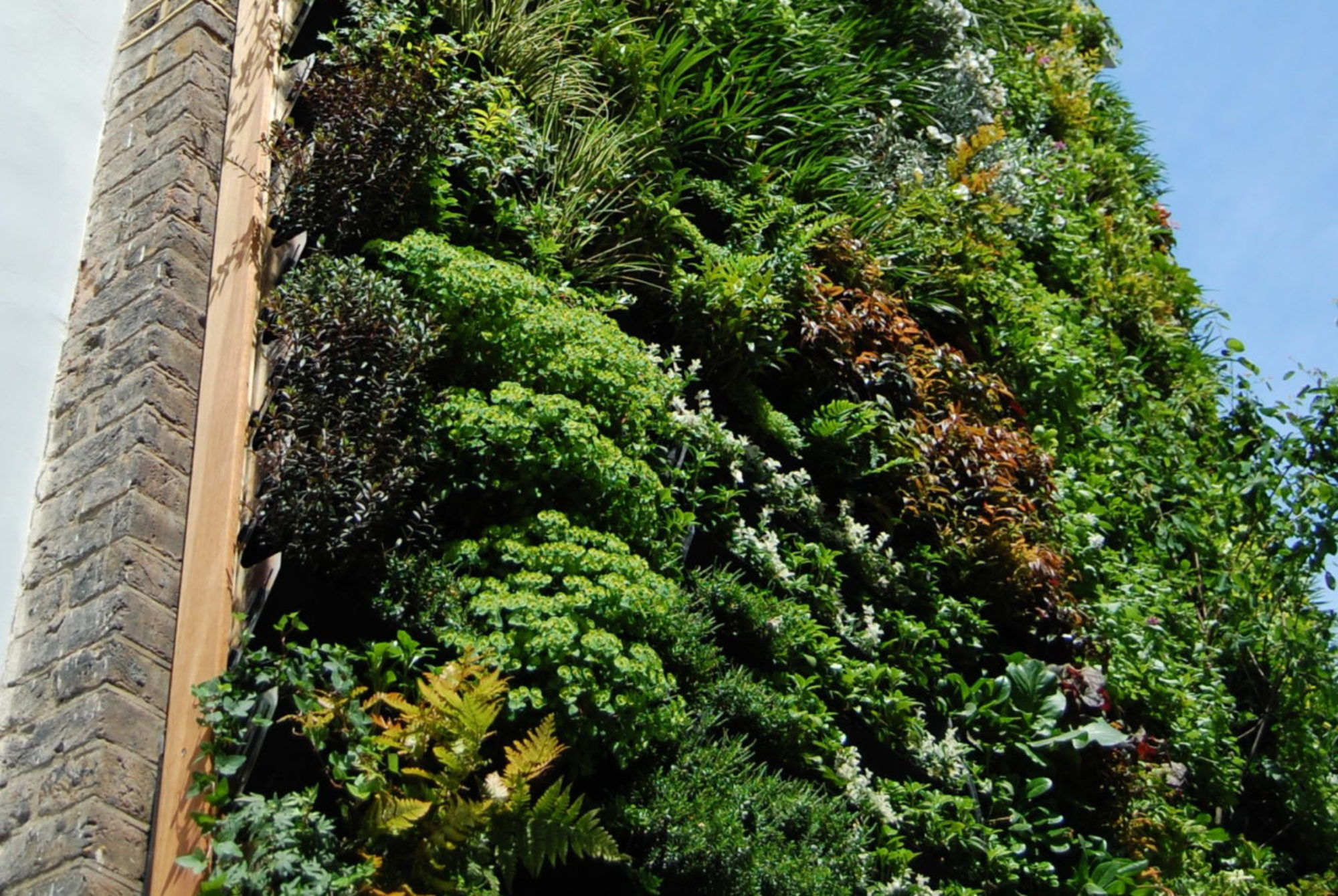 The Living Wall